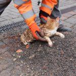 Katze aus schmalen Rohr einer Oberflächenentwässerung gerettet