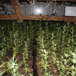 Polizei findet Hanfplantage in Schwerstedt im Weimarer Land