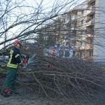 Sturmtief Niklas: Baum stürzt auf Kinder in Weimar-West