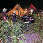 Happy-End bei Sturmeinsatz: PKW schrottreif, Wildtauben gerettet