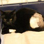 Zeugen gesucht: Katze durch Falle in Wormstedt schwer verletzt