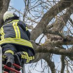 Drei Tage auf dem Baum: Feuerwehr rettet Katze in Blankenhain