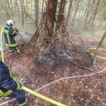 Kinder kokeln im Wald bei Blankenhain – Feuerwehr verhindert Schlimmeres