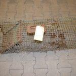 Tierquäler aus Blankenhain fängt Katze, ertränkt und tötet sie mit Axt