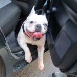 Feuerwehr befreit Hunde in Eisenach aus überhitzten Autos