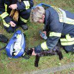 Bewusstlose Katze bei Kellerbrand gerettet - Drei Personen verletzt