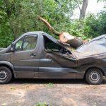 Sturmböen: Baum kracht auf Transporter und Haus in Weimar