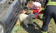 Mann stirbt bei Unfall im Saale-Orla-Kreis, Hund überlebt