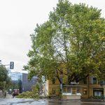 Sophienstiftsplatz in Weimar wegen Unwetter gesperrt