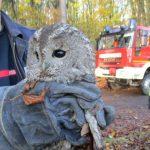 Feuerwehr befreit Raufußkauz aus Kamin in Eisenach