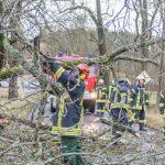 Alte Kastanie gab in Blankenhain aufgrund der Sturmböen nach