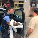 Polizei übergibt angeschlagene Igel an Zoopark in Erfurt
