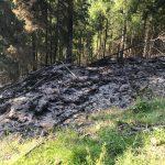Waldbrand fordert Wehren im Landkreis Saalfeld-Rudolstadt