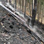Waldbrand sorgt für kräftezehrenden Löscheinsatz bei Meura