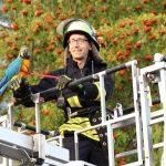 Papagei aus Notlage befreit - Tierrettung mit Drehleiter