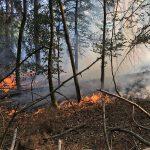 Mehrere Hektar Wald brannten bei Geismar im Eichsfeld