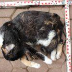 Tote Katze in Karton aufgefunden: Polizei sucht nun dringend Zeugen