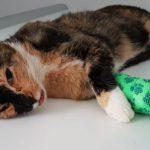 Katze in Schlagfalle gefangen: Polizei Sondershausen fahndet nach Tierquäler