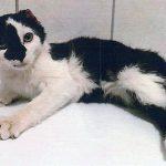 Tierquälerei mit tödlichem Ausgang in Mühlhausen: Kripo sucht dringend Zeugen