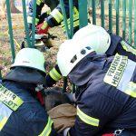 Reh steckt in Zaun fest - Feuerwehr Heiligenstadt setzt Spreizer zur Rettung ein