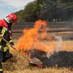 Einsatzkräfte im Landkreis Nordhausen verhindern Waldbrand gerade noch rechtzeitig