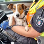 """""""Bella"""" bei Spaziergang ausgebüxt: Hundefreund rettet Terrier von der A9 bei Eisenberg"""